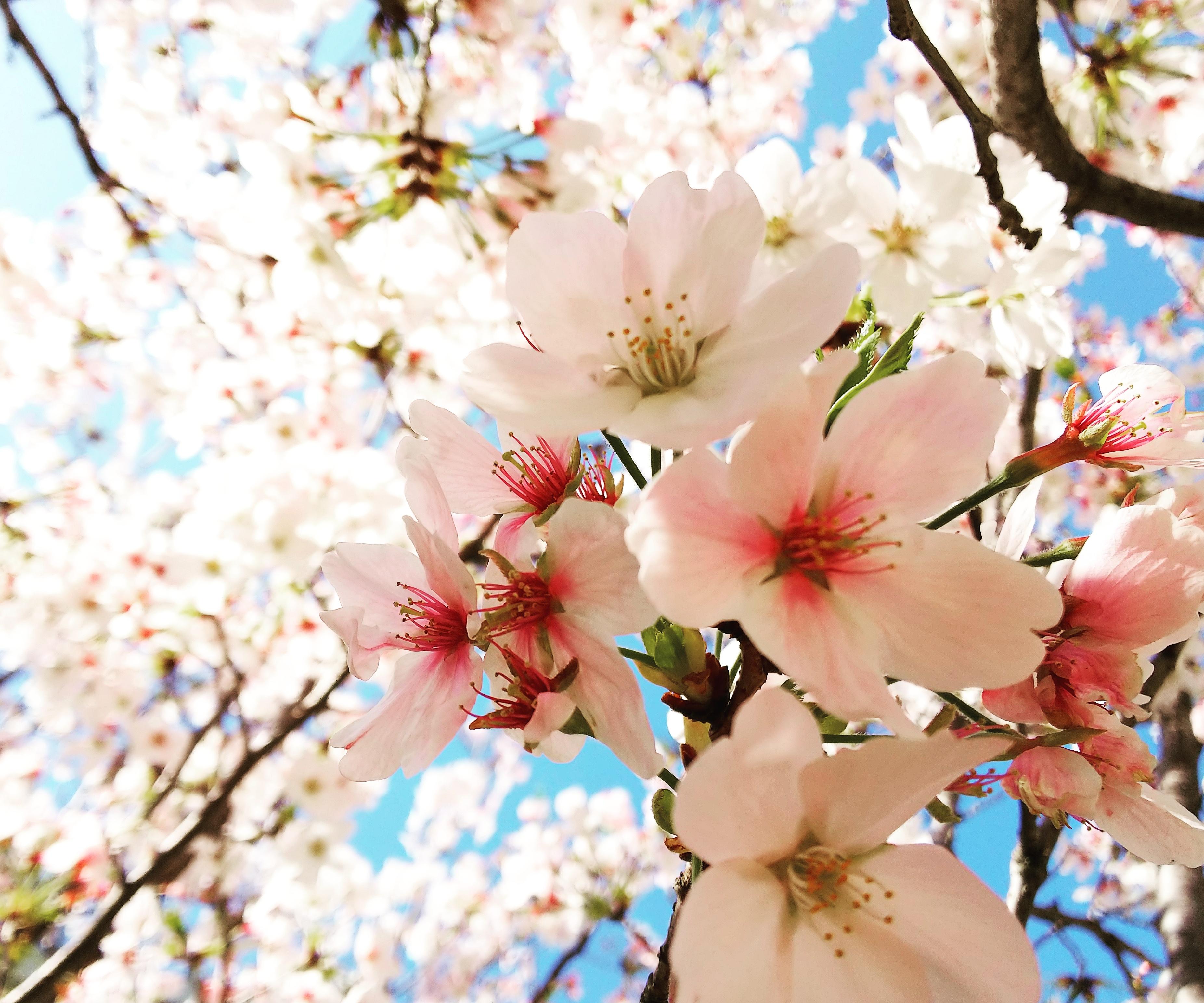 http://kumashiyo.sakura.ne.jp/blog/t/IMG_20180328_143445_862.jpg